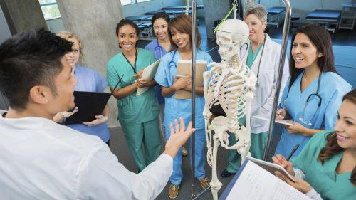 mb inpost medical studies anatomy e1528415856806 500x281 - Mediaboard - Medical Studies