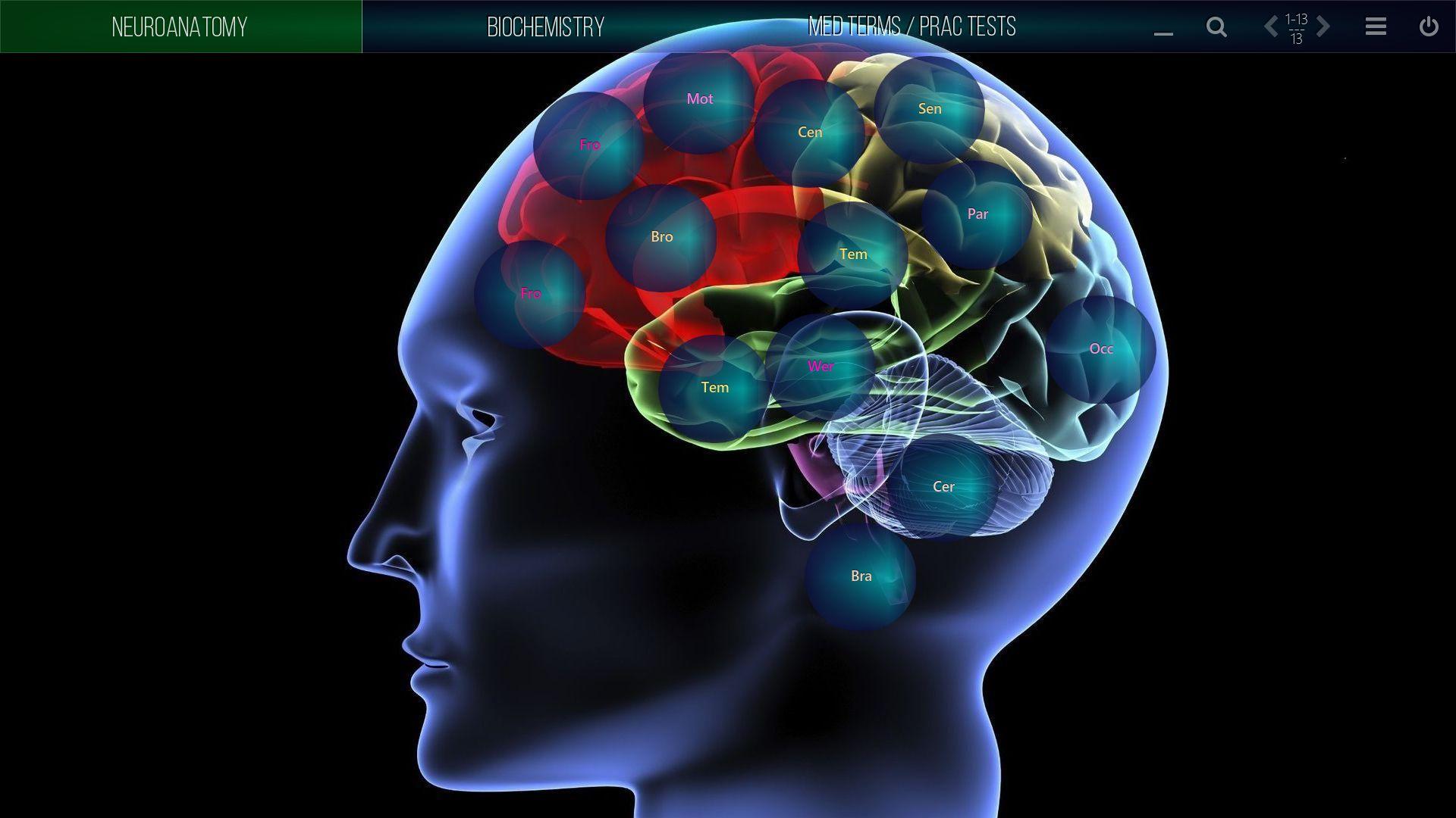 mediaboard video poster medical neuroanatomy ENGLISH HTLM5 - Mediaboard - Home EN